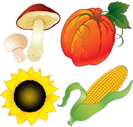 Harvest of pumpkin, mushrooms, sunflower and maize Ilustracja
