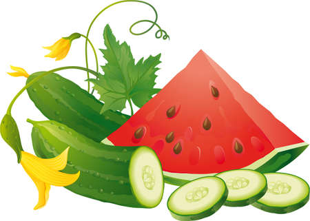 plants: Cucumber slices and juicy watermelon Illustration