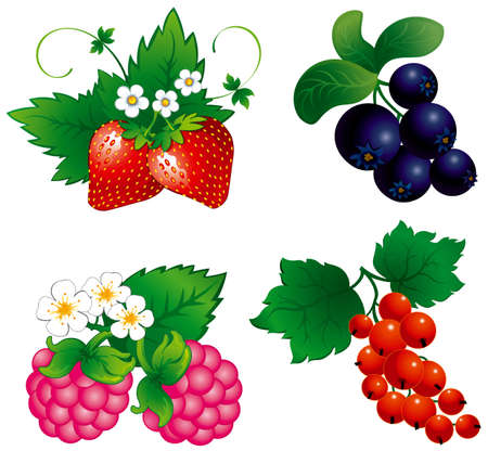 Set of berry, raspberry, blueberry, strawberry, currant,  Ilustracja