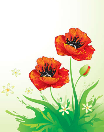 Floral background with poppy  Vector