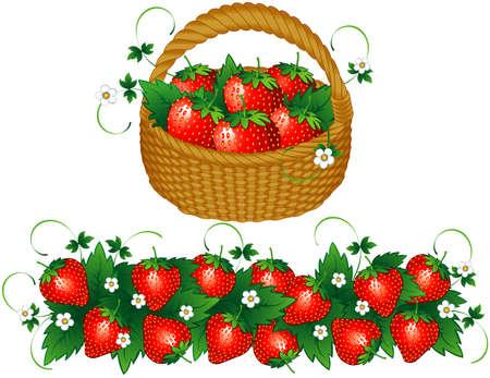 strawberry plant: Basket of strawberries