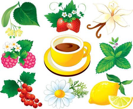 Tea herbal set, cup of tea Vector