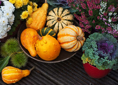 flowers garden: Autumn thanksgiving decor with pumpkins, flowers in garden