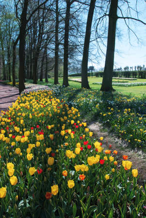 yellow flower tree: BELGIUM, BRUSSELS - Floralia International Flower Exhibition  around the castle Groot-Bijgaarden - Grand Bigard Editorial