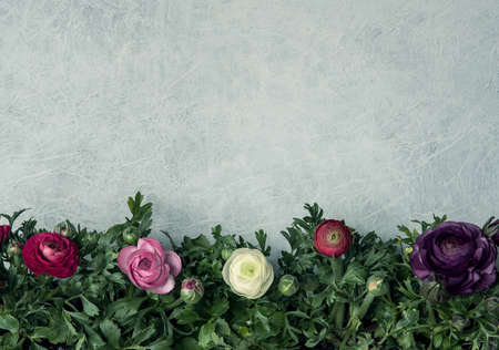 Fresh different color ranunculus bouquet over table background with copy space Archivio Fotografico - 125805578