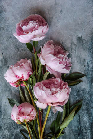 Background with pink peonies. Text congratulations, invitations Archivio Fotografico - 125805623