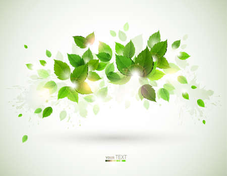 Summer shine on the branch with fresh green leaves Stock Vector - 13751018
