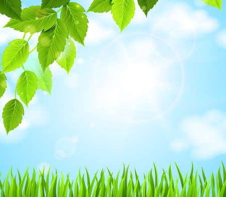 branch with green leaves hanging above the glade  Vector