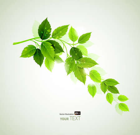Summer branch with fresh green leaves  Stock Vector - 14226526