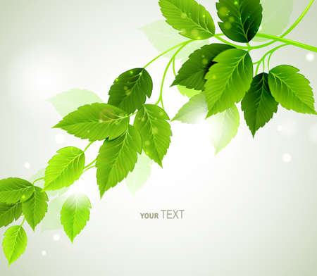 growing plant: Summer branch with fresh green leaves  Illustration