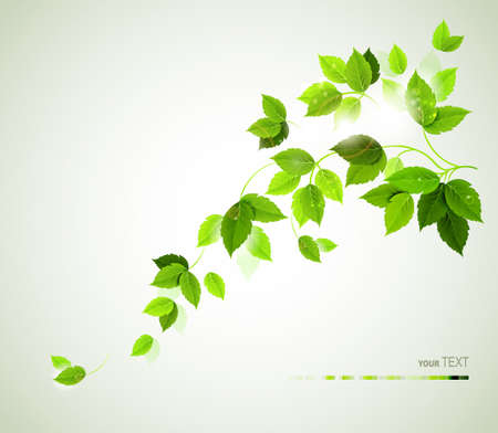 Summer branch with fresh green leaves Stock Vector - 14311386