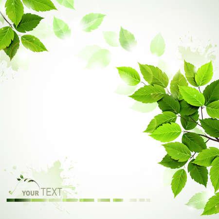 feuilles d arbres: branche avec feuilles vertes fraîches