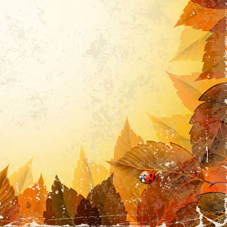 frame with old autumn leaves and ladybirds  Vector