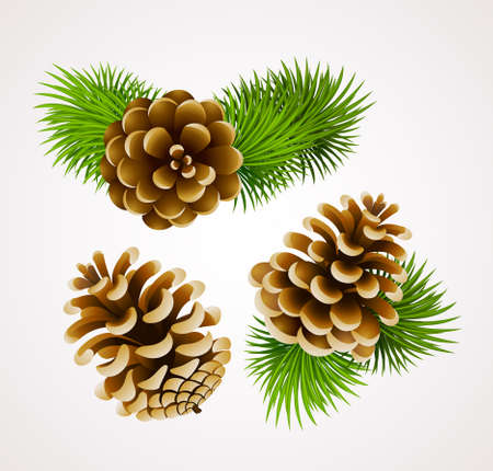 pine: branch of fir tree and cones