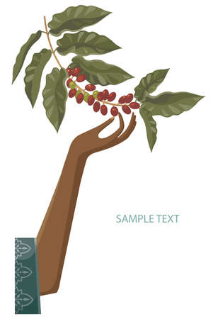 plant hand: fitter of coffee  Illustration