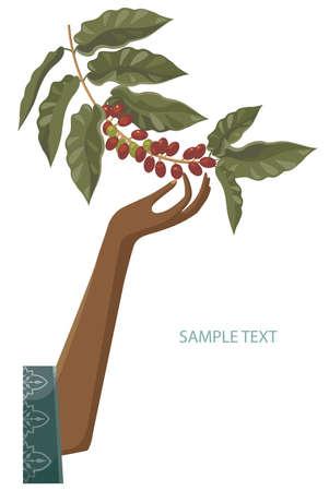 plante tropicale: installateur de caf�