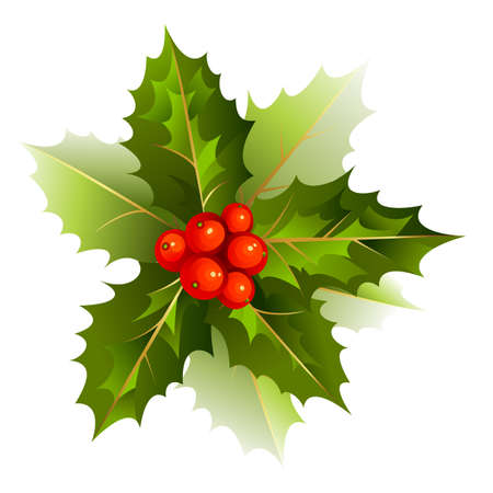 holly leaves: nice Christmas holly branch  Illustration