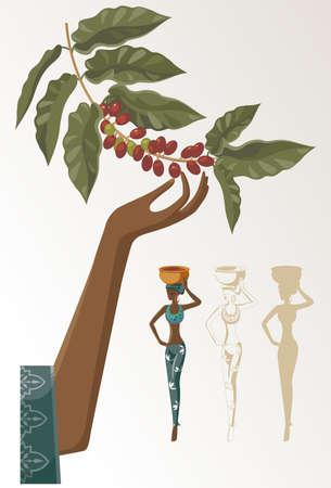 planta de cafe: mujer toma el cultivo de café