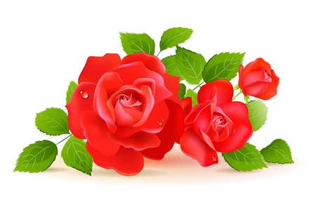 bunch of red roses: Red roses with green leaves