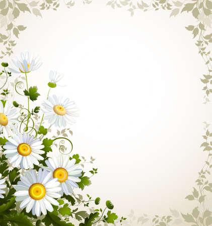 kamille: Post mit einer realistischen Kamille auf dem beige Hintergrund