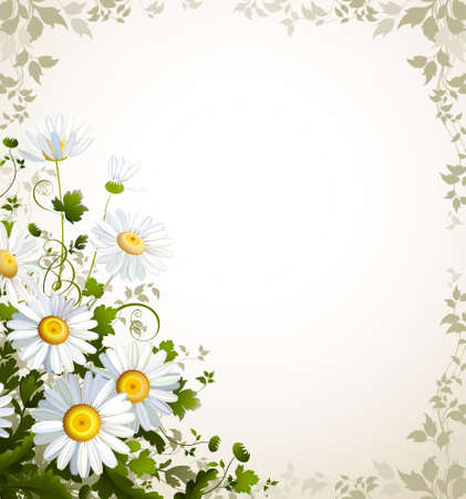 chamomile flower: postal with a realistic chamomile on the beige background