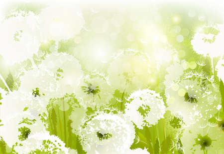 some white dandelions on the glade  Stock Vector - 15339753