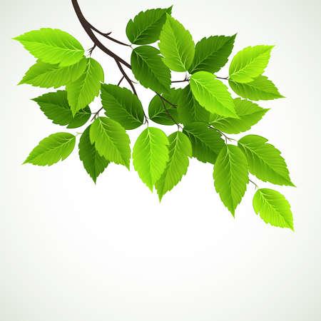 rama con hojas verdes y frescas
