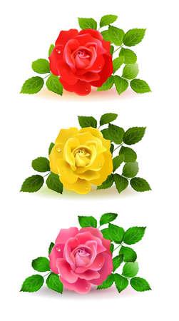 rosas amarillas: tres rosas de color con hojas verdes