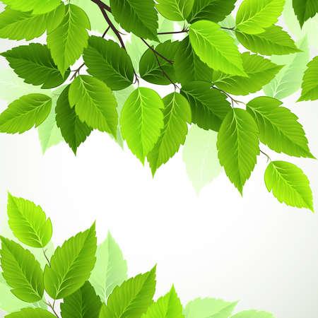 rama con hojas verdes frescas