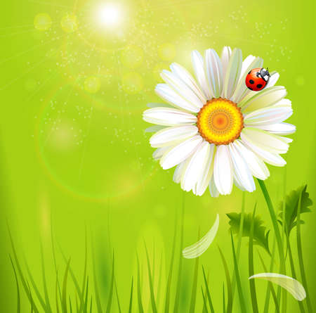 one big realistic camomile with ladybird  Vector
