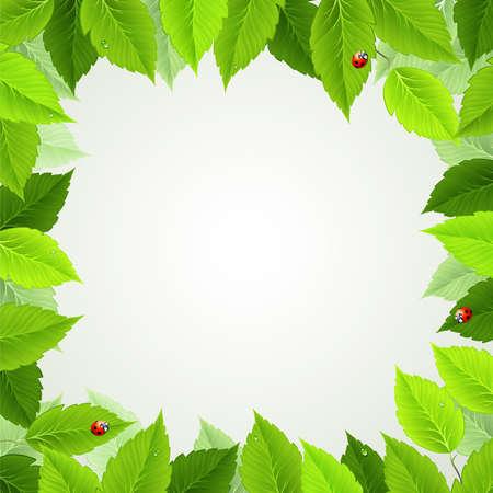 ochtend dauw: frame met verse groene bladeren en lieveheersbeestjes