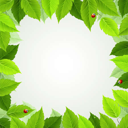 frame with fresh green leaves and ladybirds  Vector