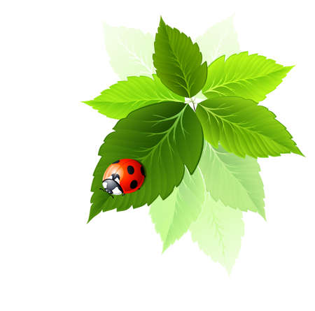 ladybird is sitting on the fresh green leaf  Stock Vector - 15338138