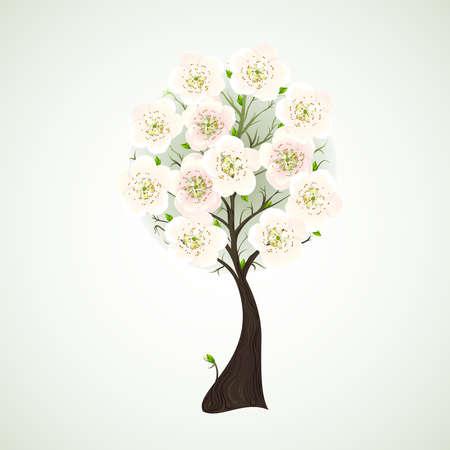 apple blossom: Season flowering tree with light flowers  Illustration