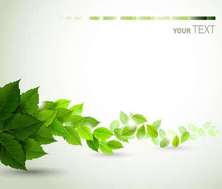 신선한 녹색 잎 지점 일러스트