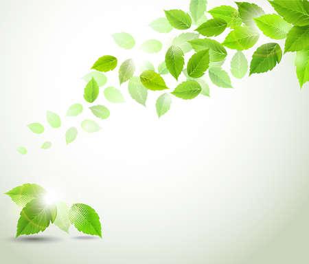 tak met verse groene bladeren Vector Illustratie