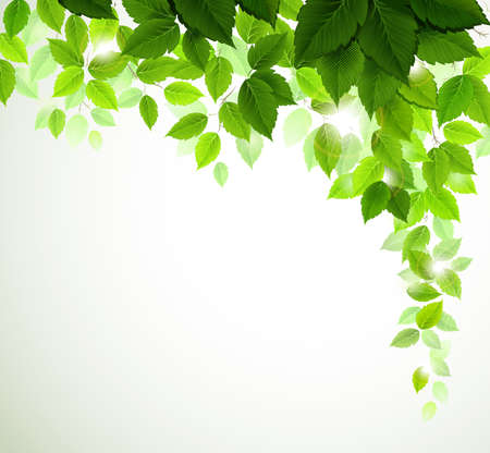 lush foliage: Summer branch with fresh green leaves  Illustration