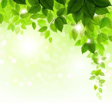 Zomer tak met verse groene bladeren Vector Illustratie