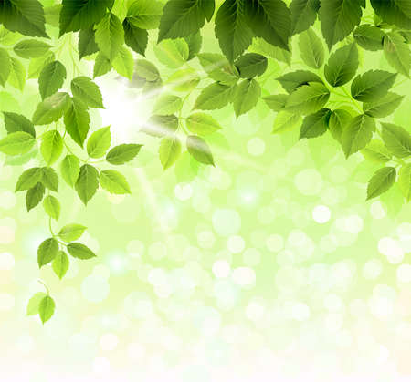green leaf: Summer branch with fresh green leaves  Illustration