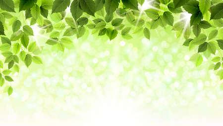 feuille arbre: Branche d'été avec de nouvelles feuilles vertes Illustration