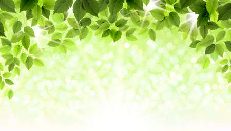 Summer branch with fresh green leaves  Ilustracja
