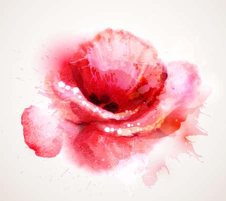 꽃이 피는 빨간 양 귀 비 일러스트