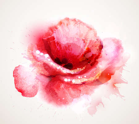 watercolor flower: The flowering red poppy