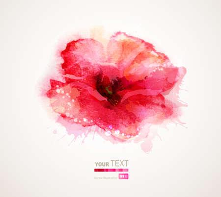 The flowering red poppy