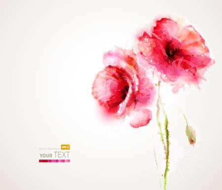 De twee bloeiende rode klaprozen