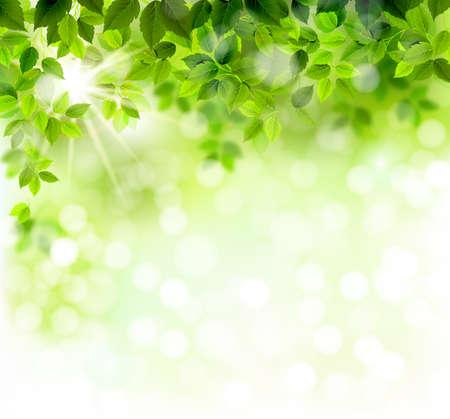 primavera: Rama de verano con hojas verdes frescas Vectores