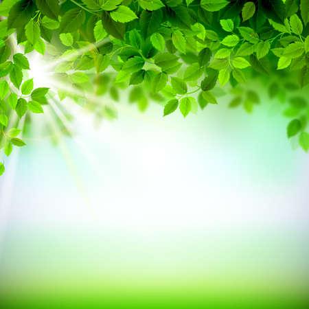 arbre feuille: Branches d'�t� avec des feuilles vertes fra�ches Illustration