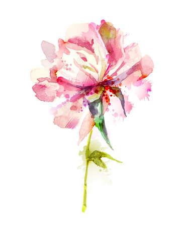 Flower: La peonia rosa singola fioritura Vettoriali