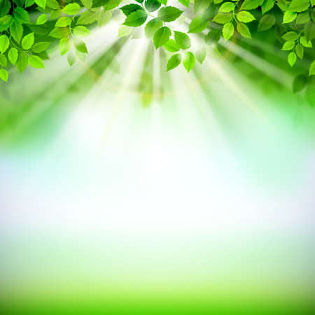 Summer fresh green leaves with sun rays