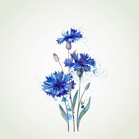 blue cornflowers by watercolor Elements Ilustração